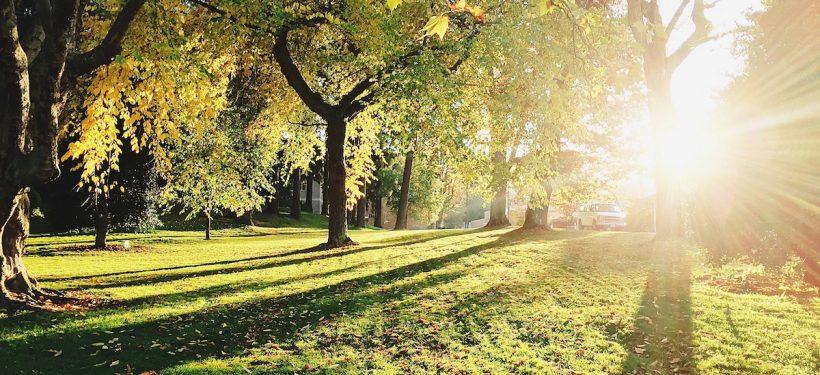 Die schönsten Parks in Düsseldorf | Topliste | Mr. Düsseldorf