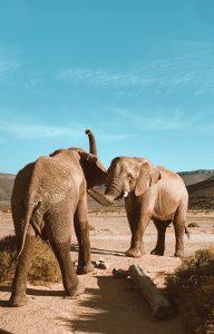 Reisebericht aus Kapstadt | Magazin – Mr. Düsseldorf | Safari Elefanten