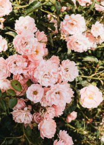 Blumen F.U.S.S. | Top 10 Blumenläden in Düsseldorf | Topliste