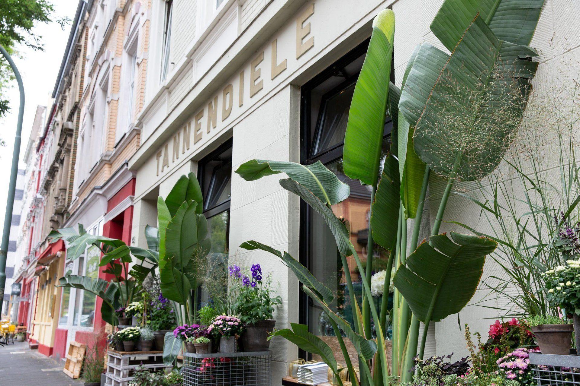 Tannendiele I Mr. Düsseldorf Düsseldorf stellt sich vor: Tannenstraße I Topliste