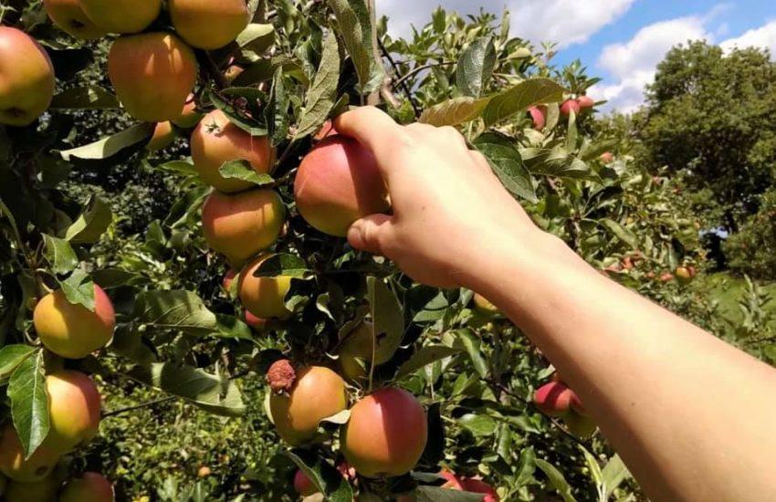 Apfelparadies Wittlaer | Top 10 Hofläden in Düsseldorf und Umland |Mr. Düsseldorf |Topliste | Foto Credit: Apfelparadies Wittlaer