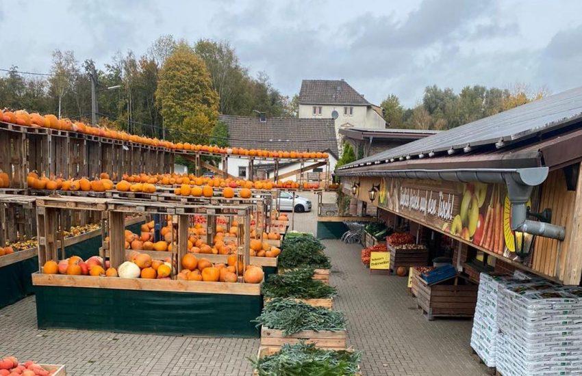 Bauerngarten Benninghoven | Top 10 Hofläden in Düsseldorf und Umland |Mr. Düsseldorf |Topliste | Foto Credit: Bauerngarten Benninghoven