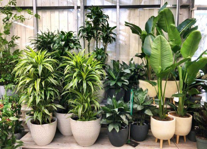 Zimmerpflanzen und Töpfe | 8 Tipps für einen grüneren Daumen | Mr. Düsseldorf 2021