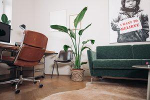 Pflanzen im Mr. Düsseldorf Homeoffice | 8 Tipps für einen grüneren Daumen | Mr. Düsseldorf 2021