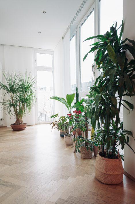 Zimmerpflanzen in unserem Eingangsbereich | 8 Tipps für einen grüneren Daumen | Mr. Düsseldorf 2021