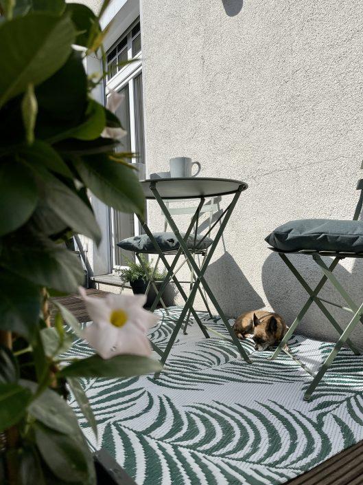 Deko auf unserem großen, sonnigen Balkon zum Innenhof | 8 Tipps für euren grüneren Balkon mit Bogie's | Mr. Düsseldorf 2021