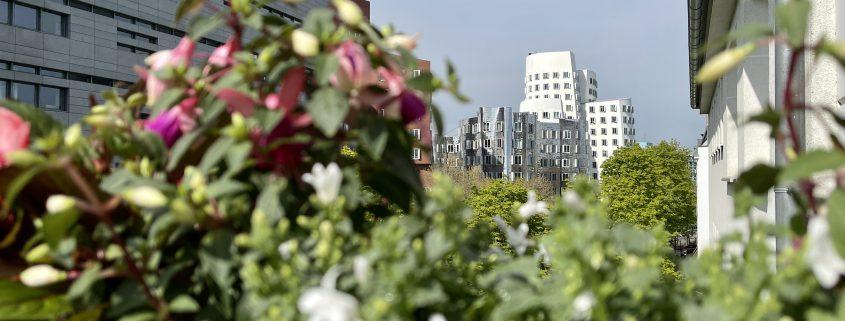 Blumenkästen kleiner Halbschatten Balkon | 8 Tipps für euren grüneren Balkon mit Bogie's | Mr. Düsseldorf 2021